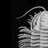 Avatar for cephalopod_poop