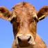 Avatar di cowfurnace