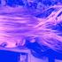 Avatar for sofiathedancer