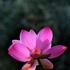 Avatar for flordelotorosa1