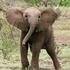 Avatar di pinkelephant87