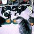 Avatar for catfoodkitten