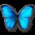 Avatar for littlebluewings