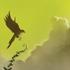 Avatar für Birchlore