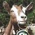Avatar for goatman1982