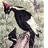 Avatar for tailwaker