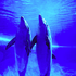 Avatar for mariadelphin