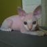 Avatar for snoop-cat