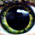 Avatar for dissipatedfog