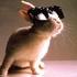 Avatar for rabbit_LM