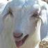 Avatar for goatboat