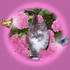 Avatar for pinktigernroses