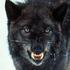 Avatar for WolfShadow
