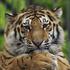 Avatar de mister_tiger