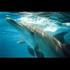 Avatar for wilddolphin