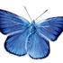 Avatar for idaa2