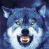 Avatar for vlk