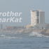 Avatar for BrotherBearKat