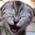 Avatar for cat72