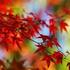 Avatar für AutumnNguyen