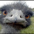 Avatar di RottenBerry