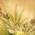 Avatar de candersonplus4