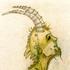 Avatar for IguanaAlemana