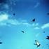 Avatar for blackbirdsparty