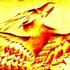 Avatar for desertfenix