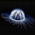 Avatar för MiegantisJautis