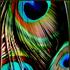 Avatar for doodlesmac