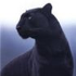 Avatar for panther75