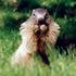 Avatar for marmottin