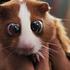 Avatar for hell_hamster