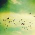 Avatar für gladiator96