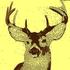 Avatar for Deer_DeeR