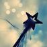 Avatar für lucent_stars
