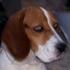 Avatar für hundvonwurstdog