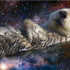Avatar for TheOtterSpace