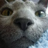 Avatar for RussianBlue0705
