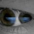 Avatar for SonOfKyuss