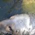Avatar for greg-fish