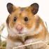 Avatar for Steel-Hamster
