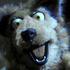 Avatar for darkkdog