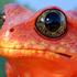 Avatar de JoHnnythefrog