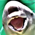 Avatar for porpoise_mouth
