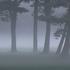 Avatar for Darkvale