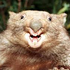 Avatar for williiewombat