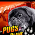 Avatar for PugsOnAPlane