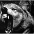 Avatar de deathwolfalpha